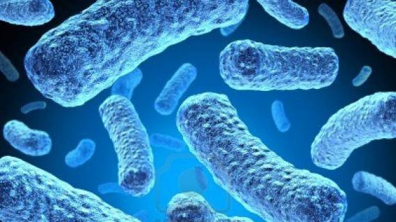 Tuberculosis Germ